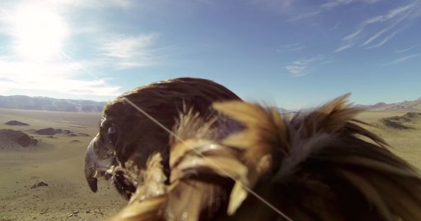 This Eagle Will Show You What It's Actually Like To Fly